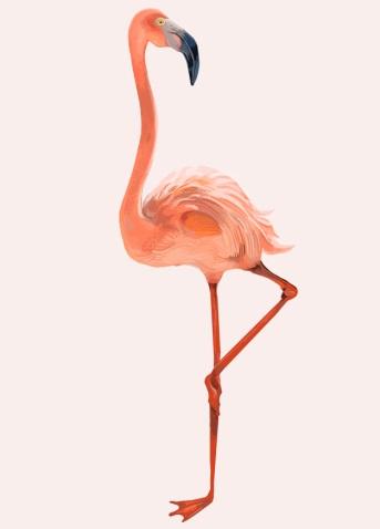 Descripción: Dibujado a mano flamenco rosa | Vector Gratis